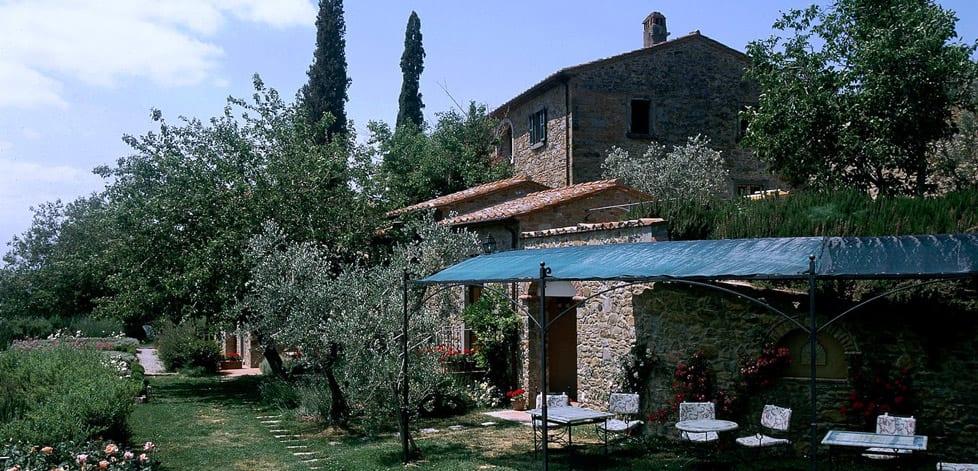 Vingård ved Cortona
